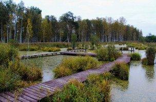 """Экскурсия по экологической тропе """"Заповедный лес"""""""